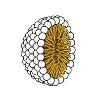 Micelele sferice
