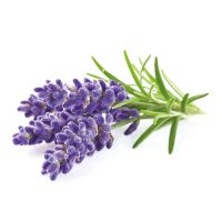 Narrow-leaved lavender extract